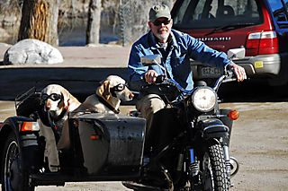 Dogs Side Car Salida M08 web