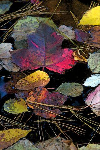 Autumn in a Barrow