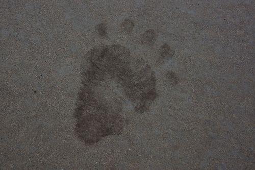 Bear Paw C M8-13