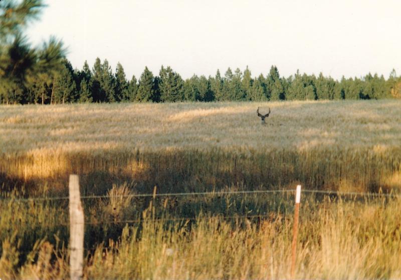 Buck Wheat Flora M83 (1)